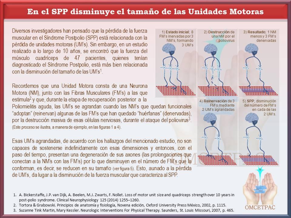 http://www.postpoliomexico.org/SPPTamanoUnidadesMotoras.jpg
